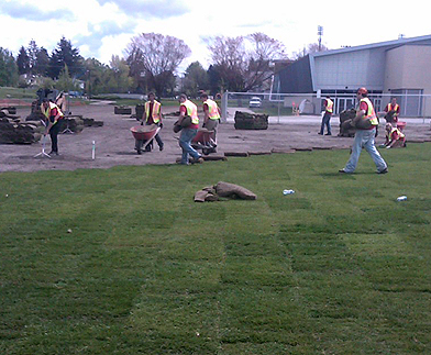 sod installation crew on a sports field