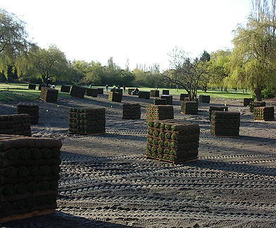 sod pallets spread on a golf course fairway