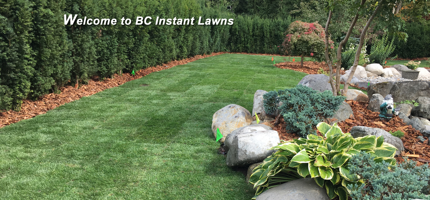 bc instant lawns, new sod installation and supply