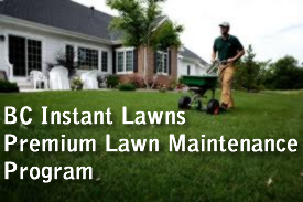 lawn maintenance program