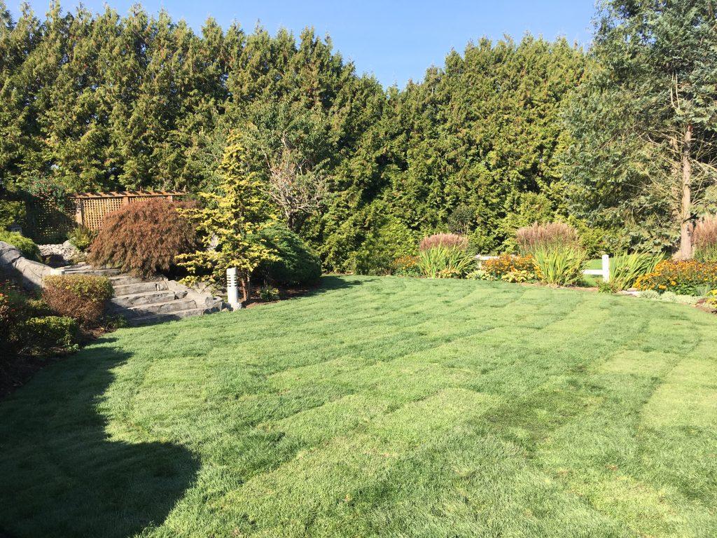sodding a new lawn