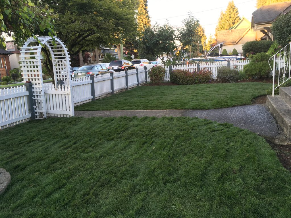 sod on a new lawn area