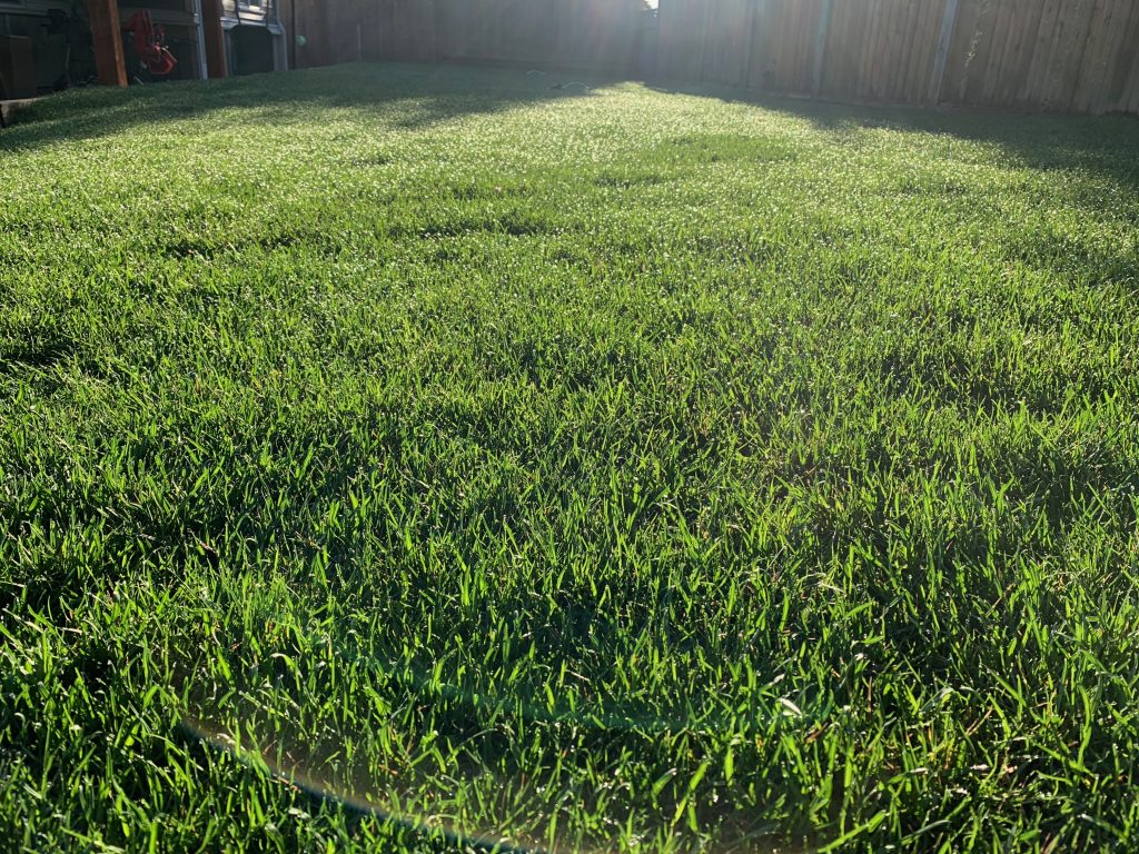 Chafer Beetle Resistant Sod