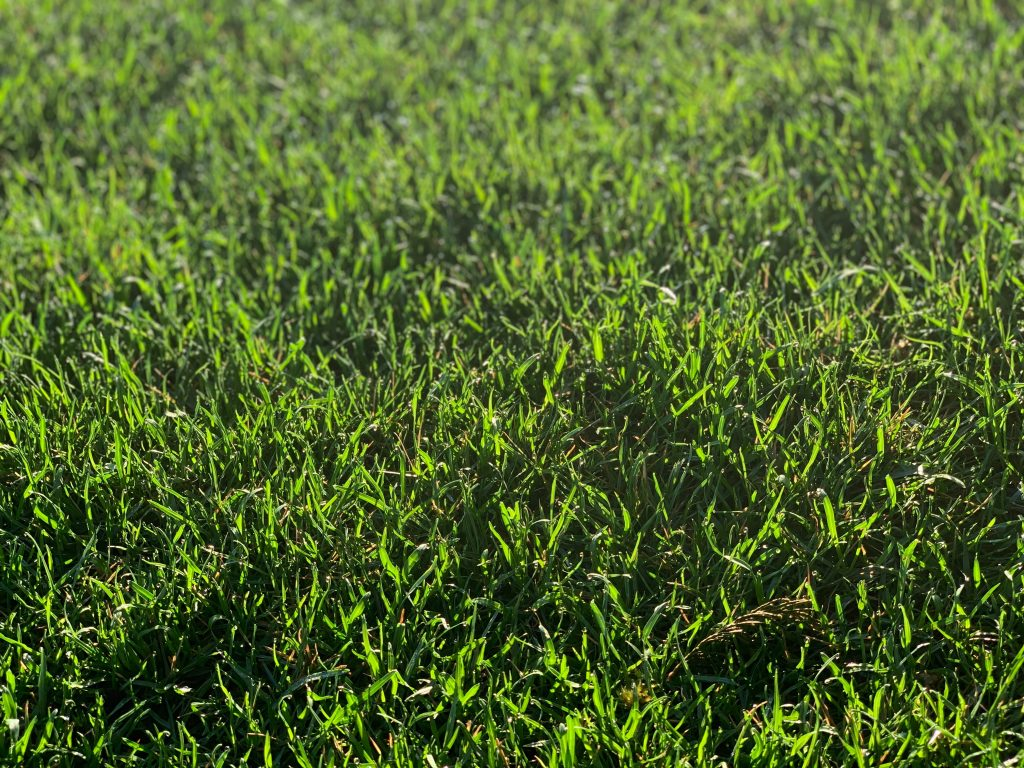 Simple lawn maintenance can help keep your grass strong and healthy.