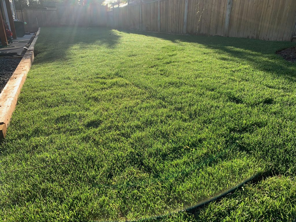 West coast premium blend sod