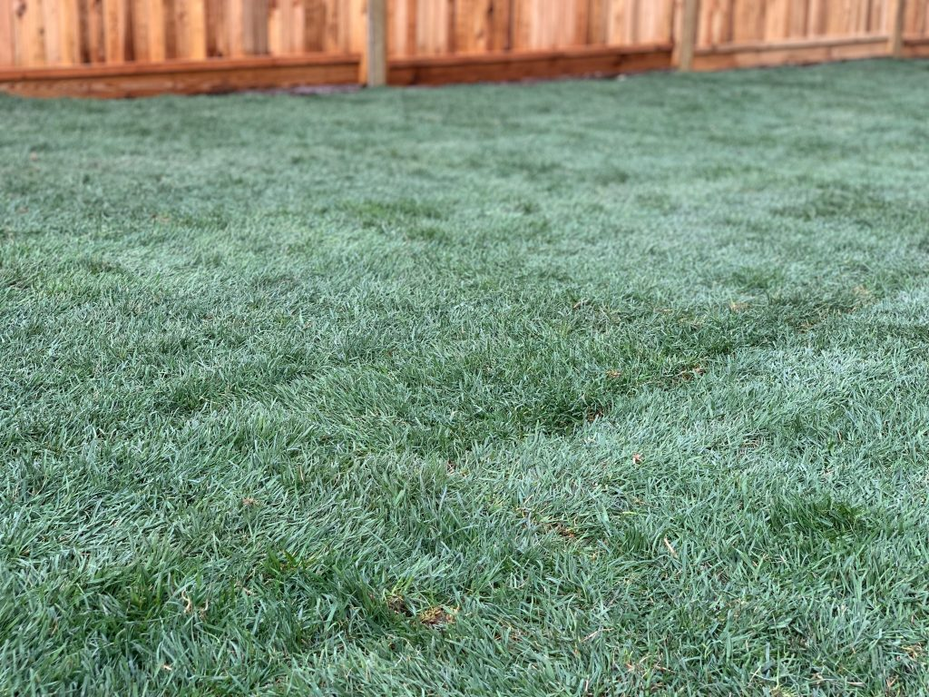 Okanagan Bluegrass type sod for cooler climates and hotter summers in British Columbia