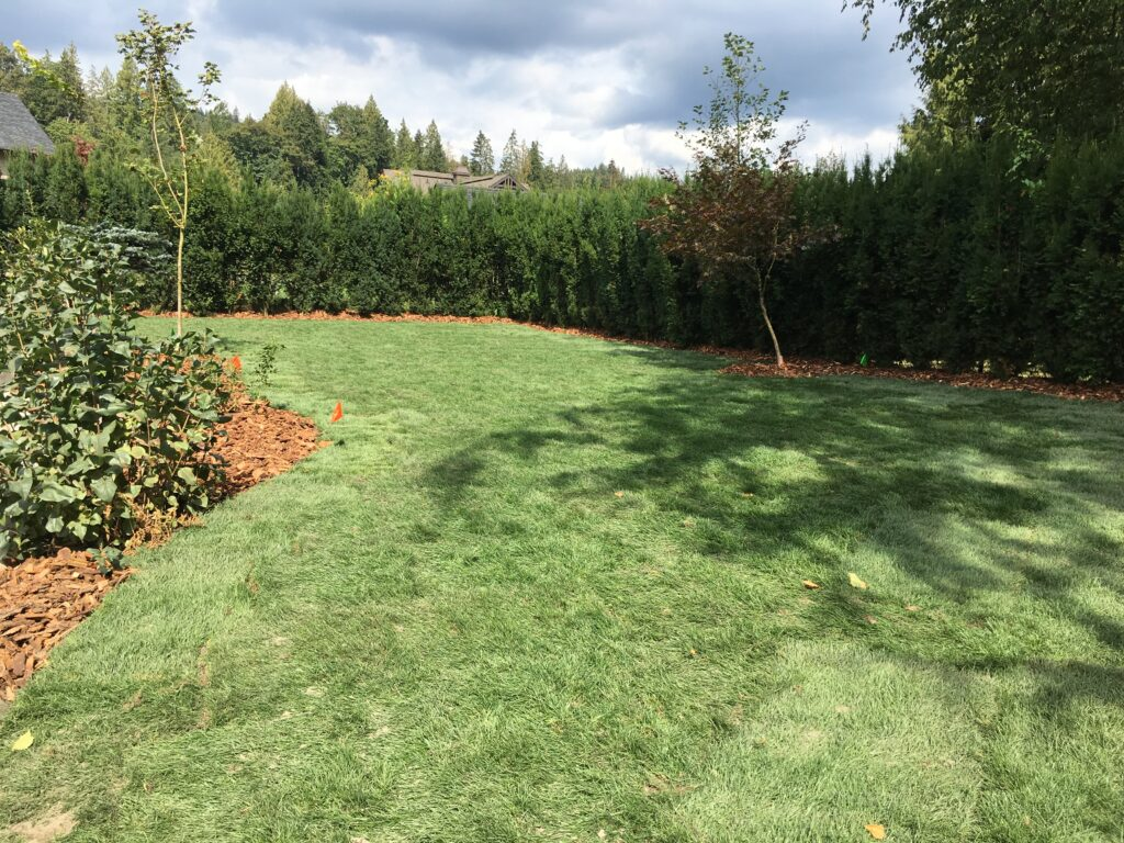 installed sod for a new lawn