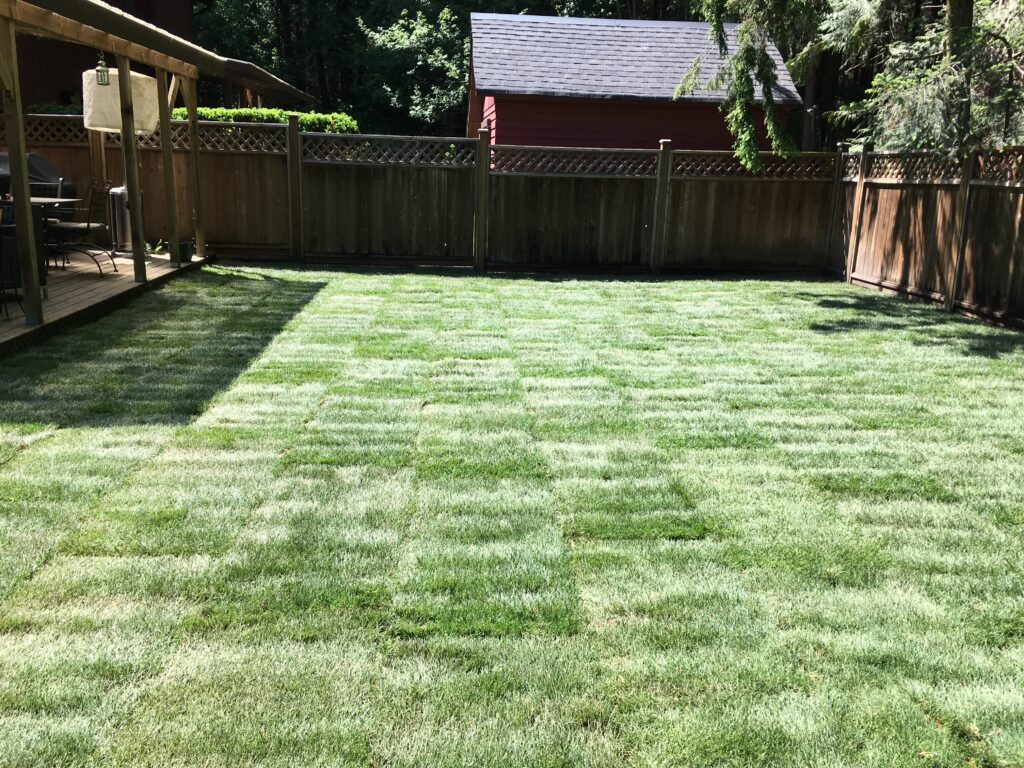 real turf grass lawn area installed in Vancouver