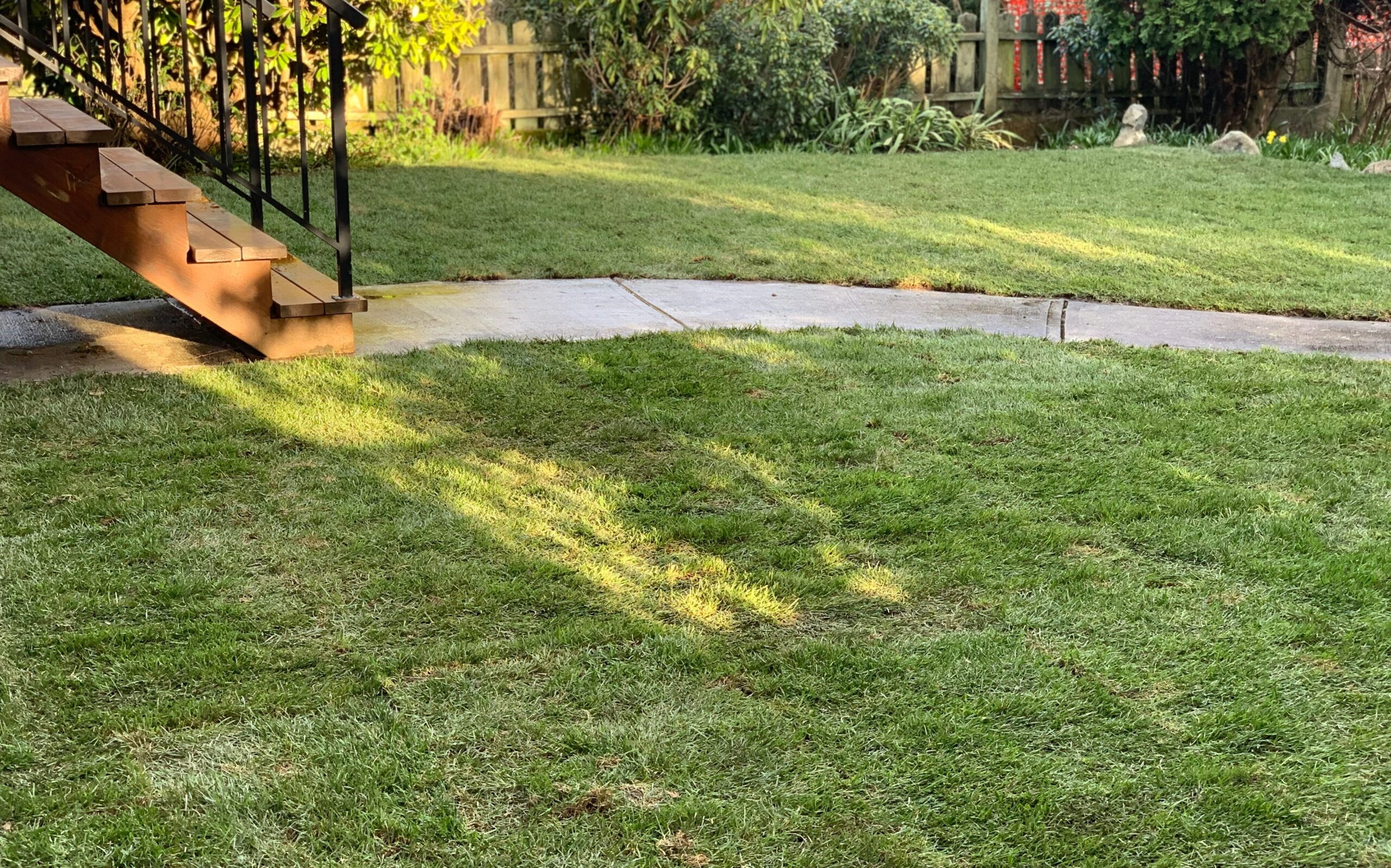 shaded lawn area